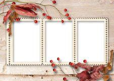 Autumn wooden background with frame for photo and rowan Royalty Free Stock Photo