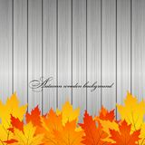 Autumn wooden background. Gold leaves Stock Images