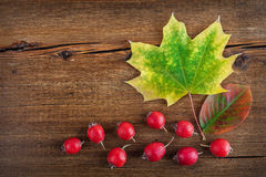 Autumn wooden background with maple leaves and red berry Stock Photos