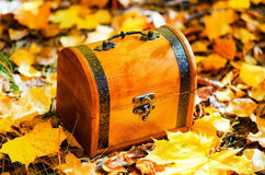 Wooden box in autumn leaves Stock Photo