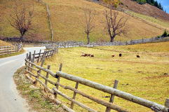 Autumn wooden fence and sheep Royalty Free Stock Images