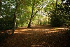 Autumn Woodland. Sunlight in an autumn woodland Stock Images