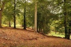 Autumn Woodland. Sunlight in an autumn woodland Royalty Free Stock Image