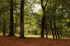 Autumn Woodland. Sunlight in an autumn woodland Royalty Free Stock Images