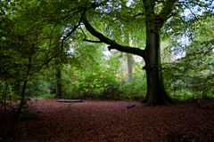 Autumn Woodland Stock Photography