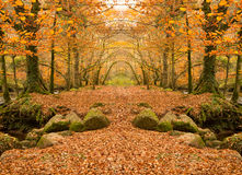 Autumn woodland. Beautiful autumnal woodland colours in a mirror image Royalty Free Stock Photography
