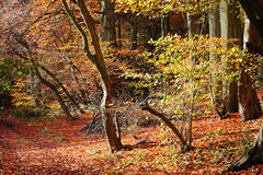 Autumn Woodland Colors Stock Photography