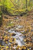 Autumn Woodland Creek Royaltyfria Bilder