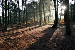 Autumn woodland. Early morning with sunlight casting rays and shadows highlighting woodland floor Stock Image