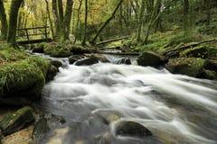 Autumn Woodland en Cornualles Imagen de archivo libre de regalías