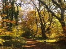 Autumn woodland in England Stock Image