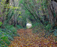 Autumn woodland footpath Royalty Free Stock Images