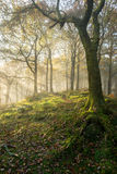 Autumn woodland with gentle sun rays casting light Royalty Free Stock Photo