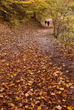Autumn woodland path. People walk in the distance on a woodland path in autumn Stock Photo