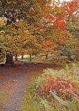 Autumn Woodland Path Stock Photos