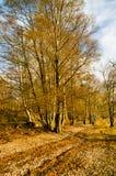 Autumn Woodland Path imagen de archivo libre de regalías