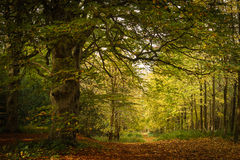 Autumn Woodland Path Royalty Free Stock Images