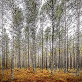 Autumn woodland scene Royalty Free Stock Photo