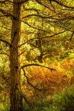 Autumn Woodland Scene Stock Photos
