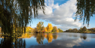 Autumn woodland scene Royalty Free Stock Photos