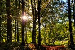 Autumn woodland scene Royalty Free Stock Images