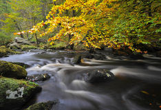 Autumn woodland stream Stock Images