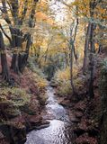 Autumn woodland stream running though autumn forest hillside royalty free stock photography