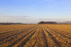 Autumn woodland and stubble field Royalty Free Stock Images
