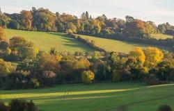 Autumn Woodland in Surrey, England Royalty Free Stock Photo