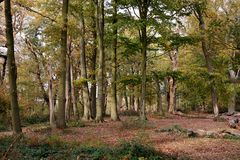 Autumn woodland view Royalty Free Stock Photography
