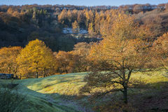 Autumn woodland in yorkshire Royalty Free Stock Images