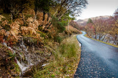 Autumn woodlands and highland road in northern Scotland. Autumn colours in a broadleaved woodland on the slopes above a highland river, northern Scotland Royalty Free Stock Photo