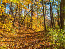 Autumn Woodlands Trail Stock Images