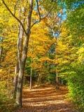 Autumn Woodlands Royalty Free Stock Photos