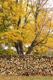 Autumn Woodpile. Woodpile with autumn tree in background Stock Photos