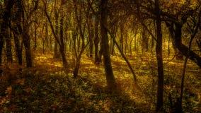 Autumn Woods Fotografering för Bildbyråer