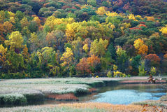 Autumn Woods. With colorful trees at Delaware River with reeds royalty free stock photos