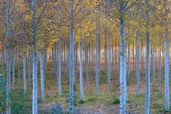 Autumn In the woods Royalty Free Stock Images