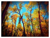 Autumn Woods Immagine Stock