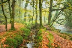 Autumn Woods Imágenes de archivo libres de regalías