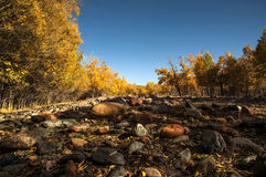 Autumn Woods Stock Afbeeldingen