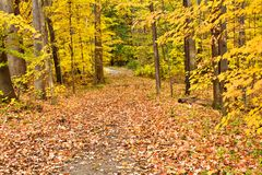 Autumn Woods Stock Image