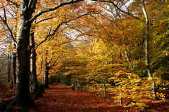 Autumn woods. Path through the woods in autumn Royalty Free Stock Photography