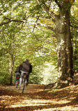 Autumn woods. People cycling in autumn woods royalty free stock photos