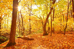 Autumn in the woods royalty free stock photo