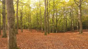 Autumn Woods Photos libres de droits