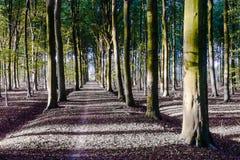 Autumn Woods Royaltyfri Fotografi
