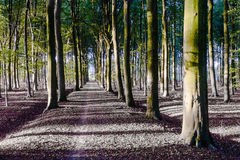 Autumn Woods Royalty-vrije Stock Fotografie