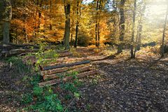 Autumn in the woods. With wood stock images