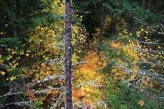 Autumn Woods Background Royaltyfri Fotografi